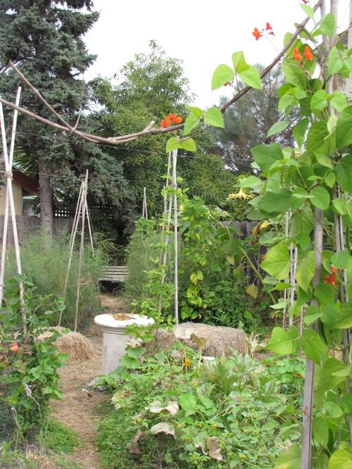 The garden now.